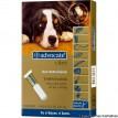 Advocate Anti pulgas e Vermes para cães de 25 a 40kg